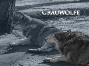 Grauwölfe