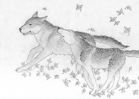 Digitale Zeichnung der Wölfin Catori
