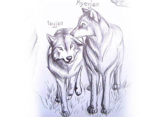 Bleistiftzeichnung der Wölfe Kyevjen und Teyjen